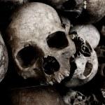 Skulls — Stock Photo