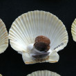 Shell, souvenir from ohrid,macedonia - Stock Photo