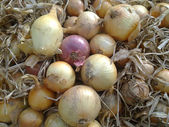 Red and yellow onions — Stock Photo
