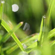 Green grass and morning dew — Stock Photo