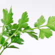 Parsley — Stock Photo #14583775