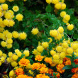 Yellow flowers background in  fall - Stock Photo