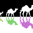 Camels, — Stock Photo