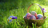 Easter eggs on the morning grass — Stock Photo