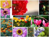 Various flowers set, collage — Stock Photo