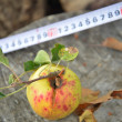 Tape measure and organic apple — Stock Photo