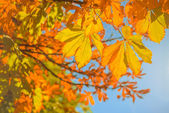 Autumnleaves — Stock Photo