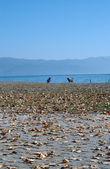 Lago ohrid, macedônia — Foto Stock
