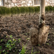 Digging autumn  soil with shovel — Stock Photo