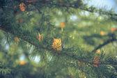 O inverno está chegando — Foto Stock