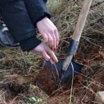 Planting new tree, planting future — Stock Photo
