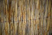 Reed background — Stock Photo