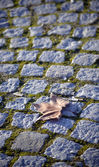 Autumn leaf on a cobblestone — ストック写真