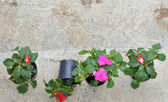 Spring flowers in a plastic pots , ready for planting — Stock Photo