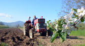 Agriculture ploughing tractor at work against apple blossom — Стоковое фото