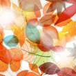 Colorful autumn leaves illustration — Stock Vector #12892207