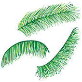 Set of highly detailed palm leaves — Stock Vector