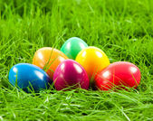 Easter eggs in Fresh Green Grass . — Stock Photo