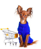 Toy Terrier with shopping cart isolated on white. Funny little d — Stock Photo