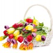 Basket of Tulips isolated on white background. Bouquet of tuli — Stock Photo #24428417