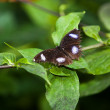 The Butterfly. A beautiful butterfly sitting in the tree - Foto Stock