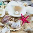 Stock Photo: Exotic seshell . treasure from sea.