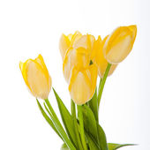 Beautiful bouquet of yellow tulips on a white background. — Stock Photo