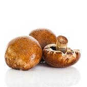Fresh mushroom champignon isolated on white background . fresh — Stock Photo