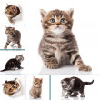 Stock Photo: Montage of cats photos