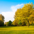 Green field and trees. Summer landscape with green grass. Beau — Stock Photo #25192861