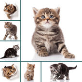 猫の写真のモンタージュ — ストック写真