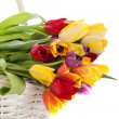 Basket of Tulips isolated on white background. Bouquet of tuli — Stock Photo #25595757