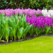 Hyacinth flowers. Spring flowers — Stock Photo #25597329