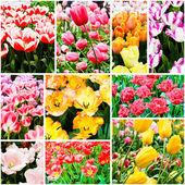 Spring flowers. Tulips — Stock Photo