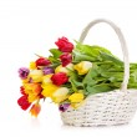 Basket of Tulips isolated on white background. Bouquet of tuli — Stock Photo #25902539