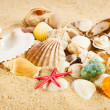 Pearl on the seashell . The exotic sea shell . Treasure from the — Stock Photo #26514815