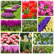 Flowers collage. Beautiful spring flowers — Stock Photo
