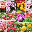 Spring flowers. Tulips — Stock Photo