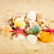 Pearl on the seashell . The exotic sea shell . Treasure from the — Stock Photo #26891501