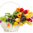 Basket of Tulips isolated on white background. Bouquet of tuli — Stock Photo #27106617