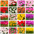 Tulips collage. Spring flowers — Stock Photo