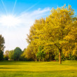 Stock Photo: Green field and trees. Summer landscape with green grass. Beau