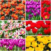 Tulipany kolaż. wiosenne kwiaty — Zdjęcie stockowe