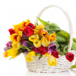 Stock Photo: Basket of Tulips isolated on white background. Bouquet of tuli