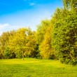 Green field and trees.  Summer landscape with green gras — Stock Photo
