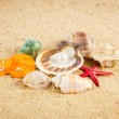 Pearl on the seashell . The exotic sea shell . Treasure from the — Stock Photo #27625145