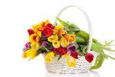 Korb mit tulpen, die isoliert auf weißem hintergrund. bouquet von tuli — Stockfoto