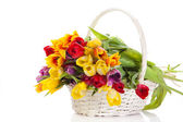 Basket of Tulips isolated on white background. Bouquet of tuli — Stock Photo