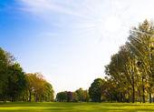 Groen veld en bomen. — Stockfoto