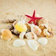 Pearl on the seashell . The exotic sea shell . Treasure from the — Stock Photo #27863111